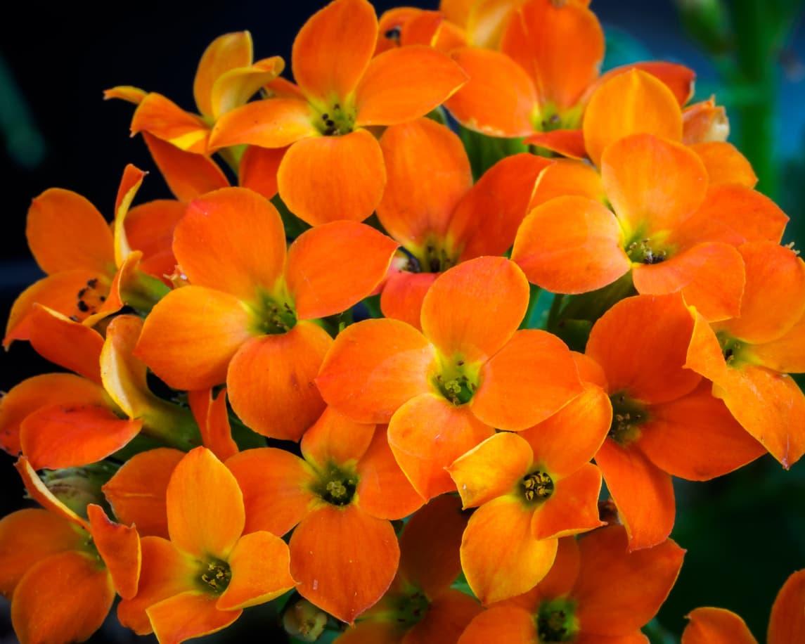 Flowerbreeder Holland
